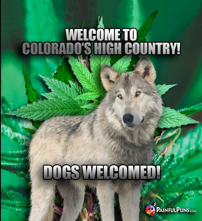Wolf Says: Welcome to Colorado's High Country! Dogs Welcomed!