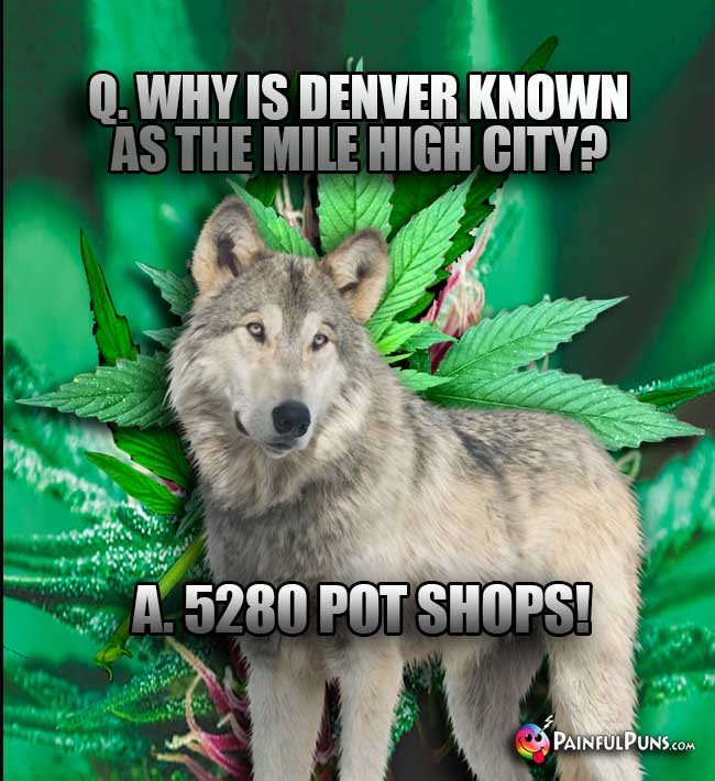 Q. Why is Denver known as the Mile High City? A. 5280 Pot Shops!