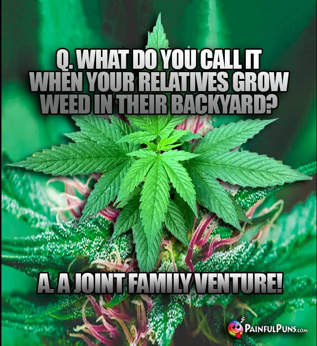Q. What do you call it when your relatives grow wee in their backyard? A. A Joint Family Venture!