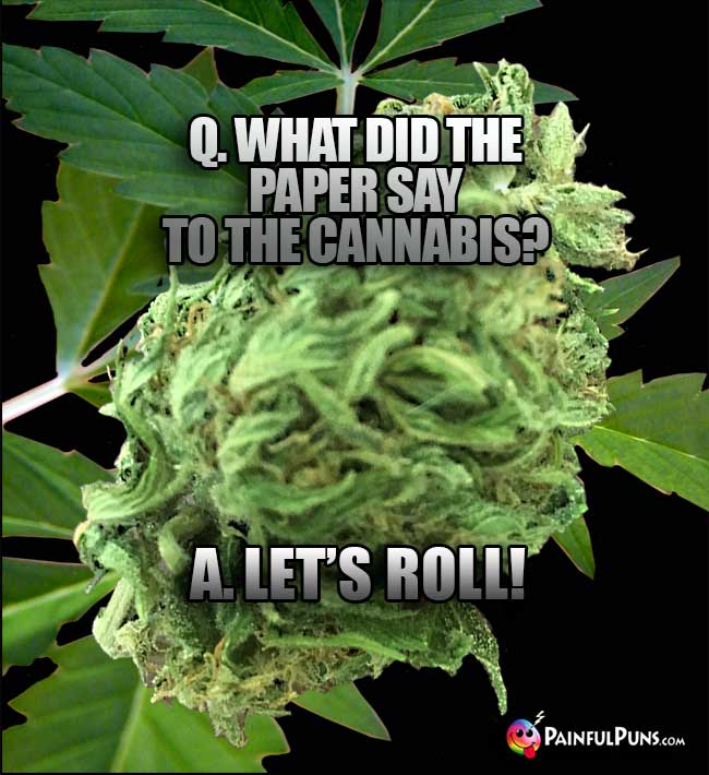 Q. What did the paper say to the cannabis? A. Let's roll!