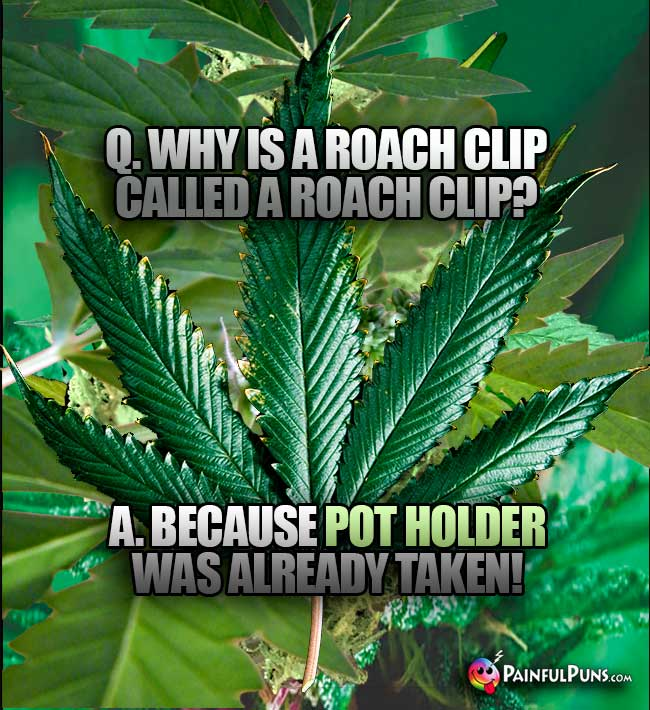 "Q. Why is a roach clip called a roach clip? A. Because ""pot holder"" was already taken!"