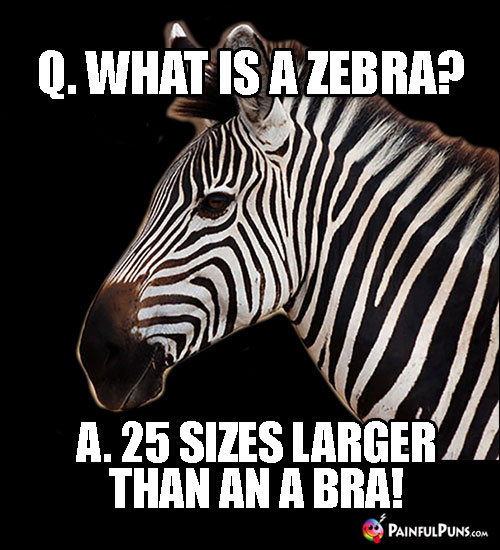 Q. What is a Zebra? A. 25 Sizes Larger Than an A Bra!